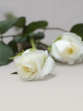 Funeral : Single White Rose AV